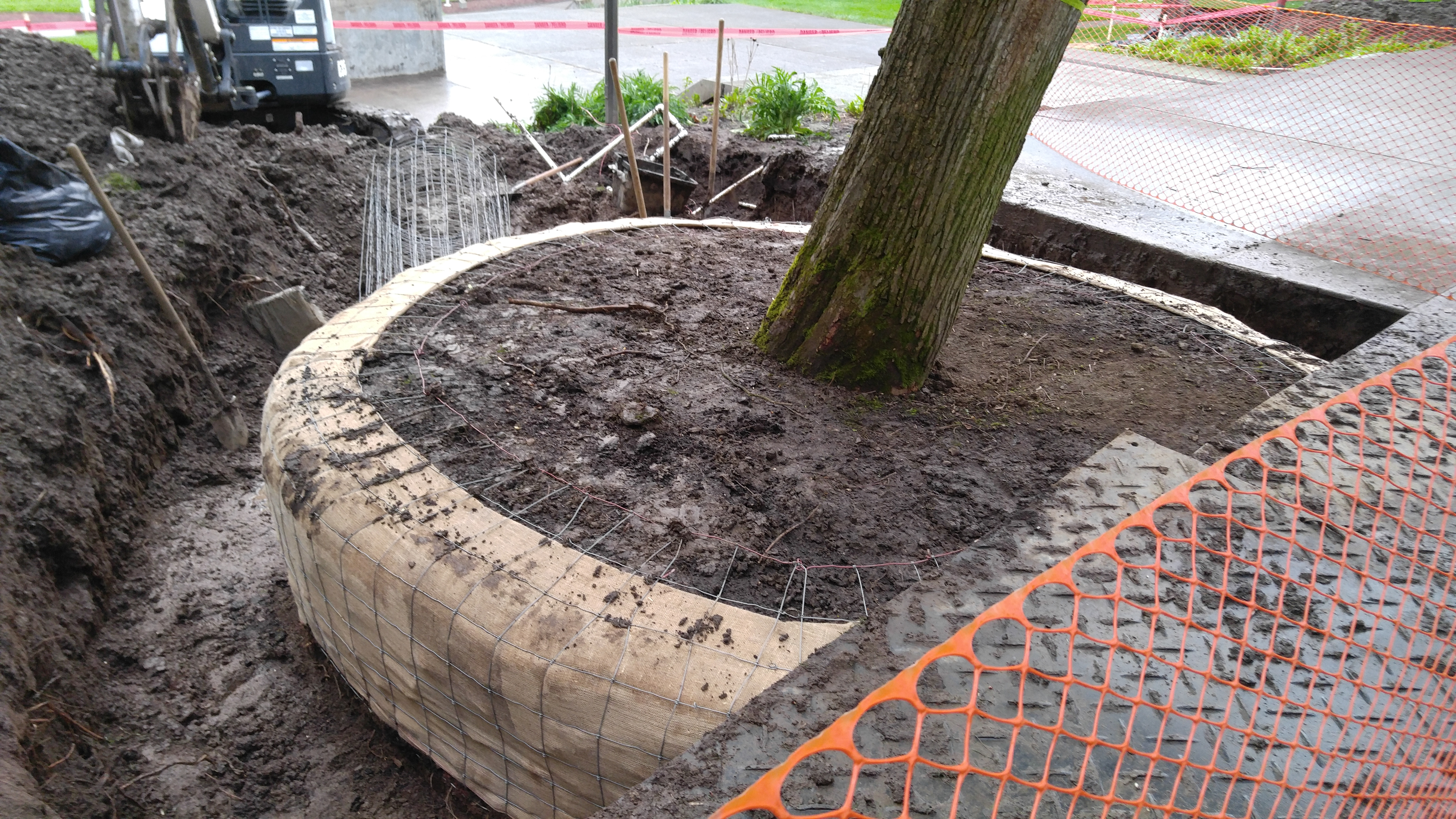 Camperdown Elm Relocation - Base.jpg